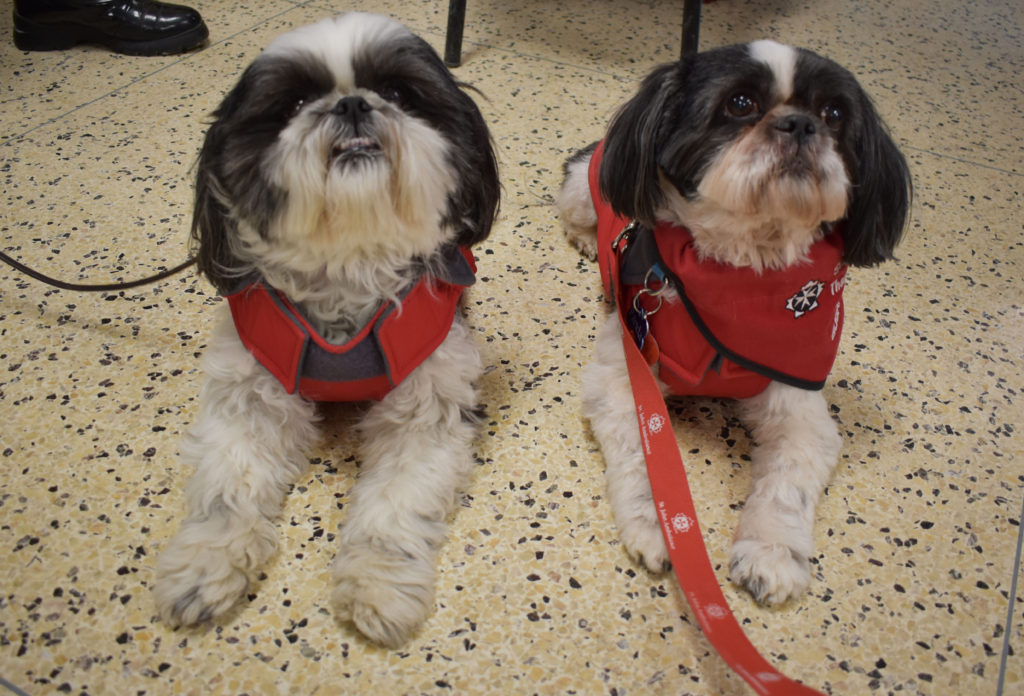 Abby and Panda, the Therapy Dogs from the St. John's Ambulance to see CNA students on Bells Let's Talk Day. These dogs are sisters who help people feel better.