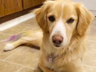 Sammy the rescue dog