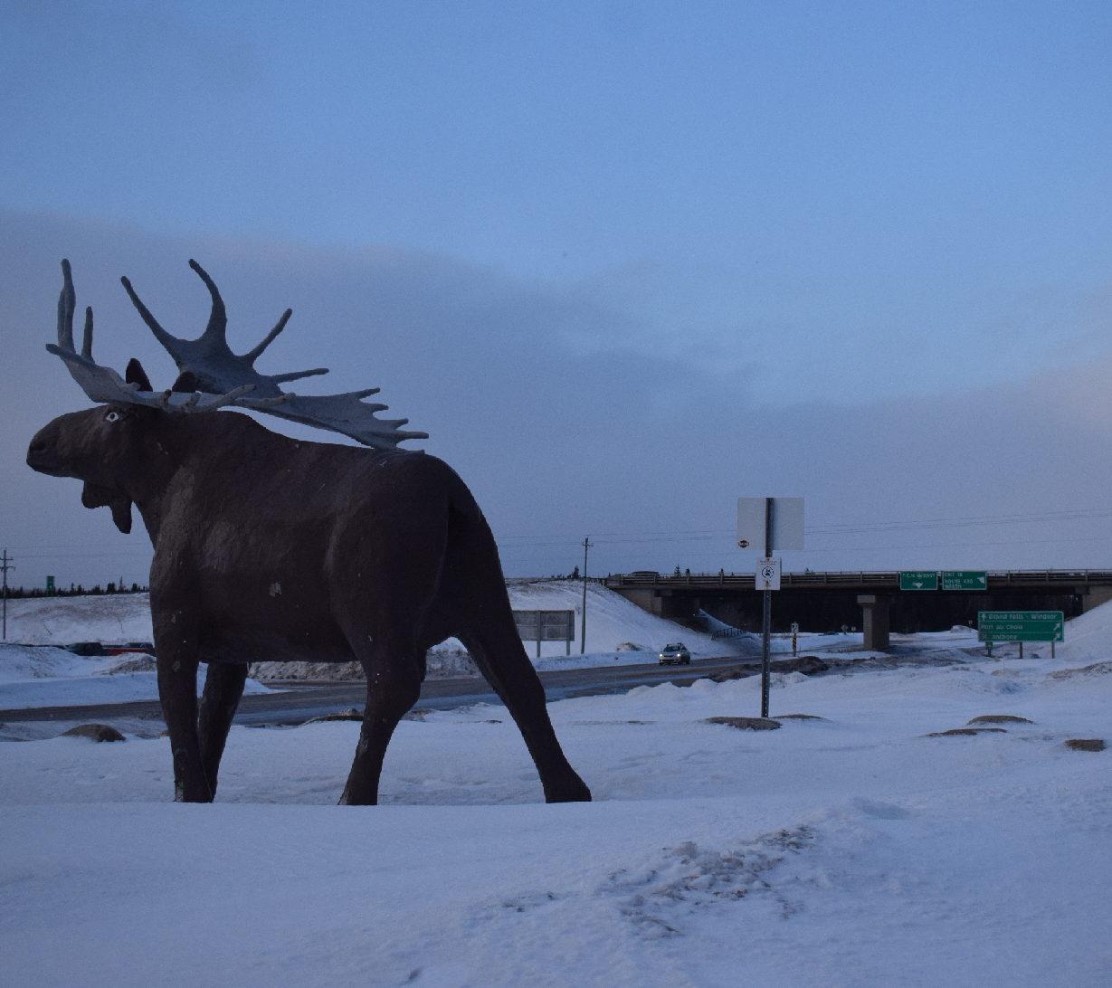 moose statue stands along Deer Lake highway