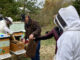 Beekeepers being taught how to treat Varroa